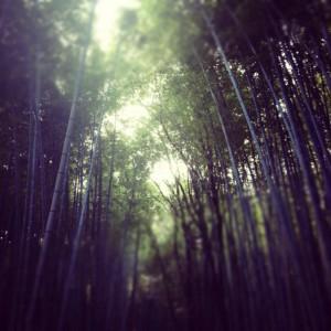 嵐山の竹林~昼間バージョン~