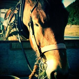 馬車馬のアローちゃん