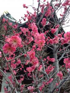 写真 2014-02-22 14 58 26
